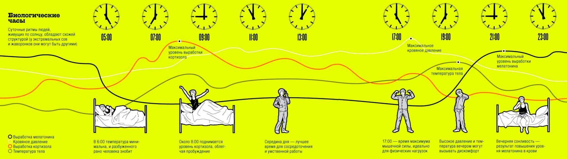 График биологических часов взрослого человека. Суточные ритмы людей, живущих по солнцу